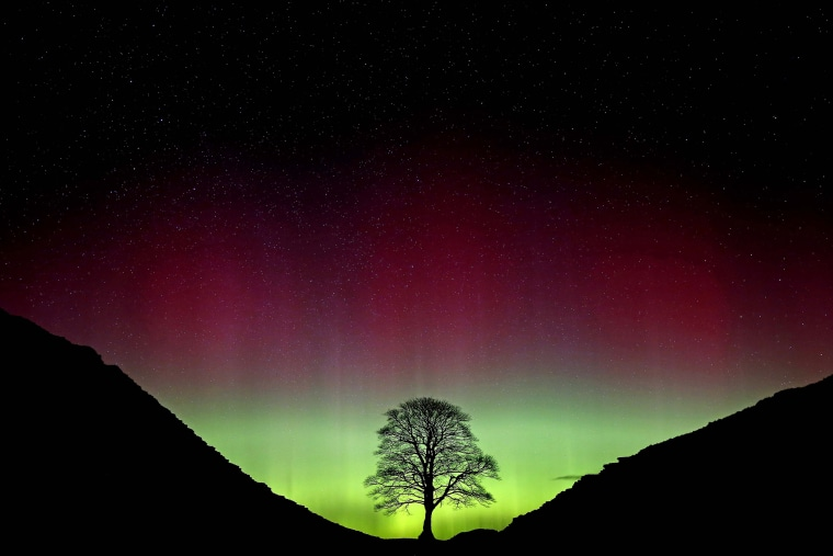 Image: The Northern Lights, or Aurora Borealis, shine over the Sycamore Gap at Hadrian's Wall