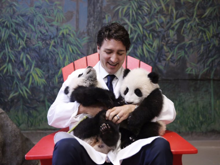 Image: Canadian Prime Minister Justin Trudeau sits with two panda cubs at the Toronto Zoo