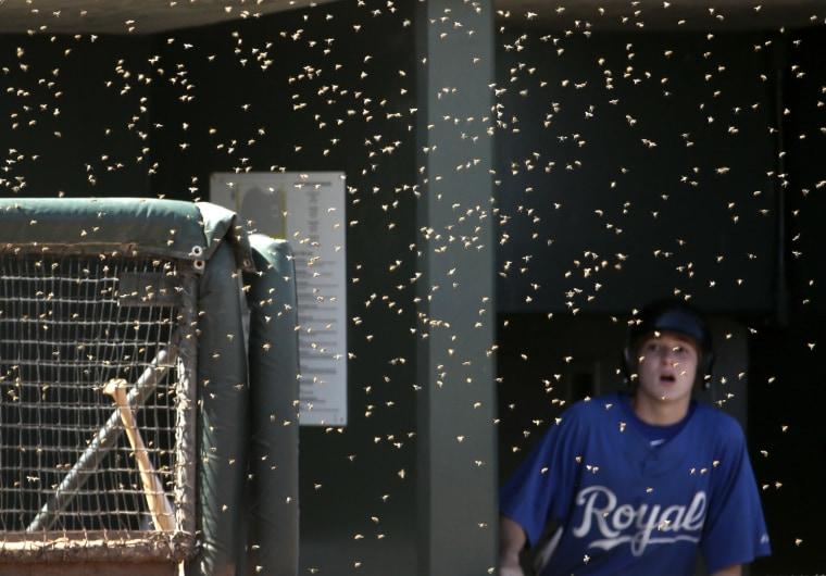 Image: Rockies Royals Spring Baseball