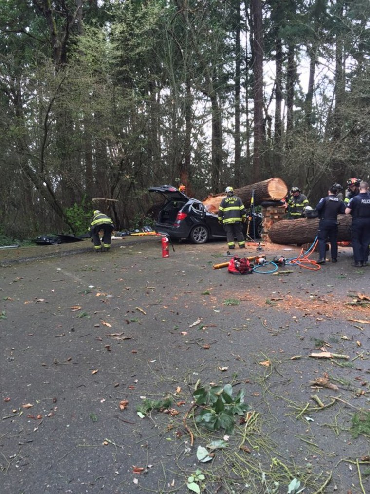 One person died after a tree fell on a vehicle Sunday in Seattle.