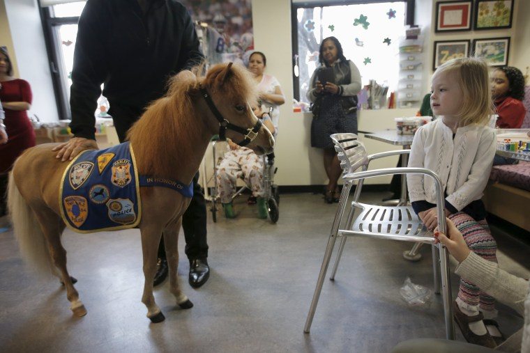 Image: Handler Jorge Garcia-Bengochea holds Honor, a miniature therapy horse from Gentle Carousel Miniature Therapy Horses, as they visit with patients at the Kravis Children's Hospital at Mount Sinai in New York