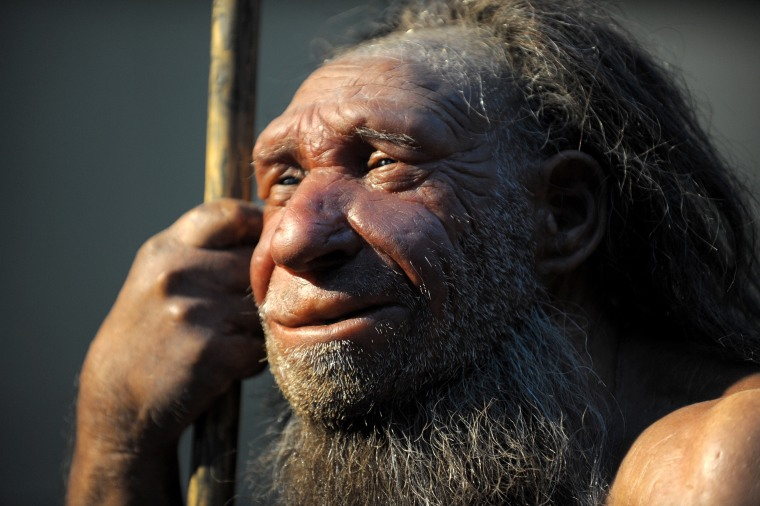 Image: The replica of an elderly Neanderthal man stands in the Neanderthal Museum in Mettmann, Germany on March 13, 2013.