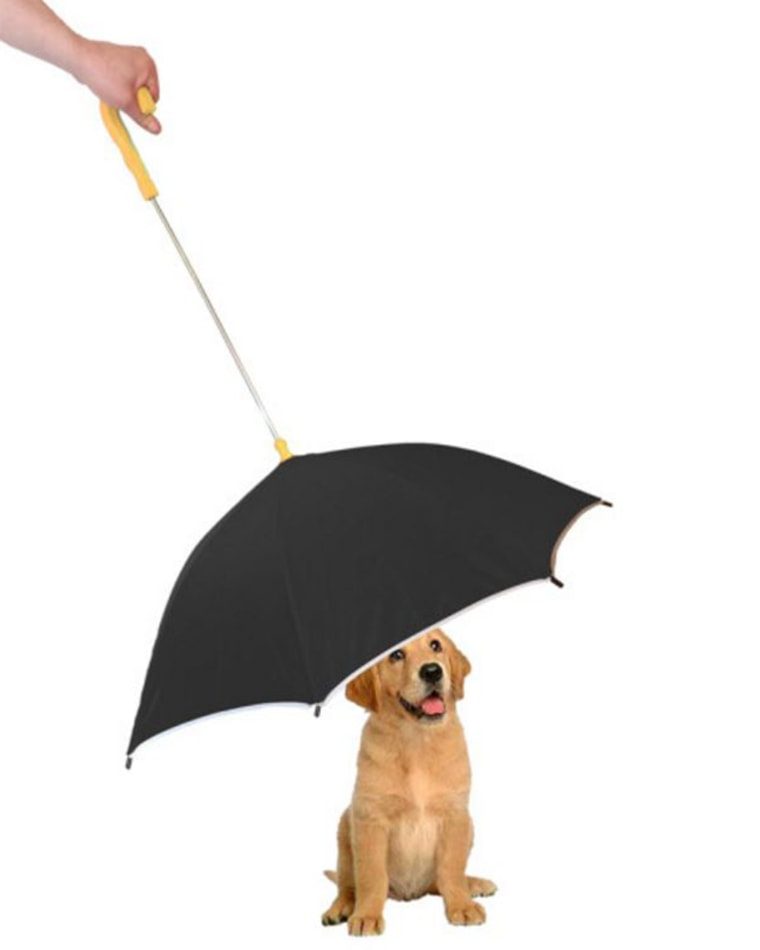 pet-umbrella-inline-today-160323