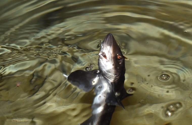 Image: Young houndsharks at Sea Life