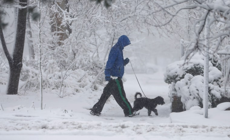 Image: Man and dog in snow