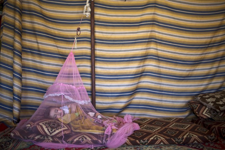 Image: A Syrian refugee sleeps under a mosquito net inside their tent at an informal tented settlement