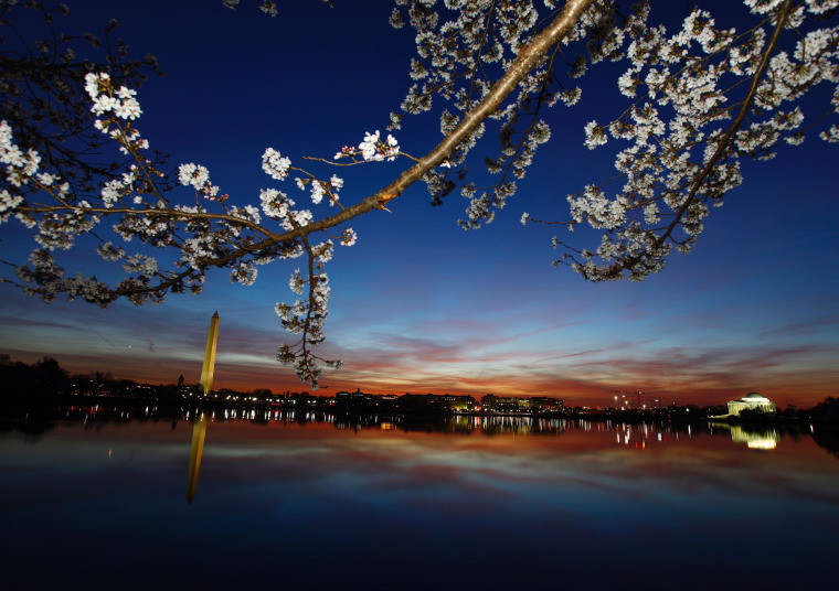 Image: US-WEATHER-CHERRY BLOSSOMS