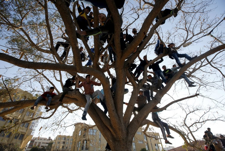 Image: Palestinians climb over a tree as they watch a cultural carnival in Gaza City
