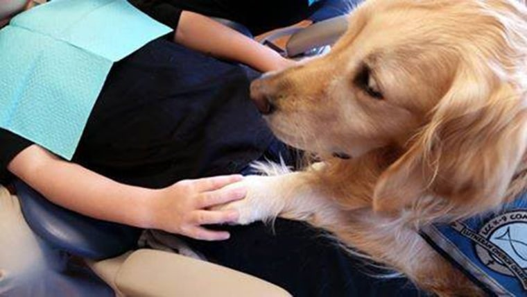 JoJo helps a patient feel calm during a dentist procedure