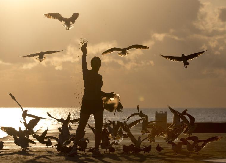 Image: Noreen Clar of Surfside, Florida, feeds birds as the sun rises