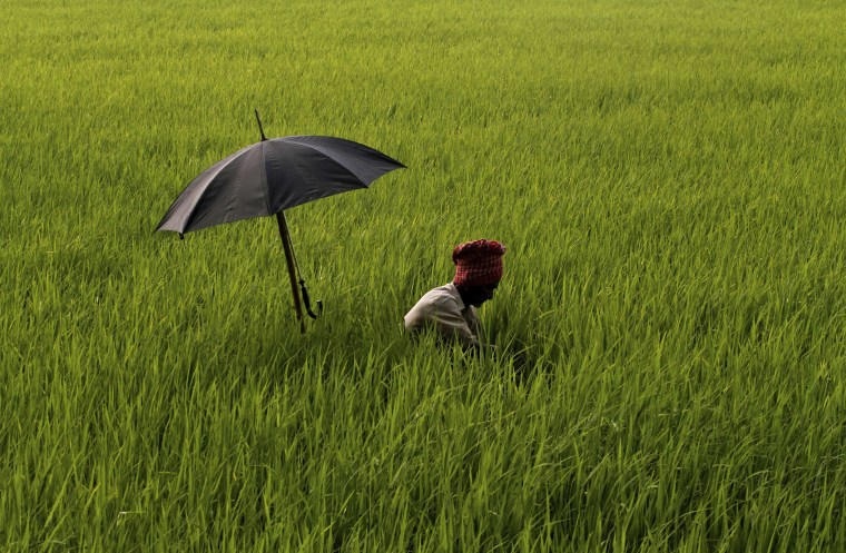 Image: An elderly Indian farmer has his umbrella mounted on his walking stick to protect himself from the scorching sun