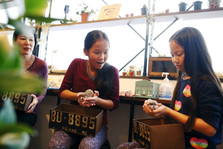 Image: Girls hold hedgehogs as their mother Kimberly Russel watches at the Harry hedgehog cafe
