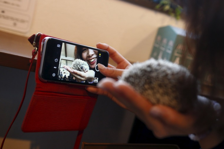 Image: A woman takes a selfie with a hedgehog at the Harry hedgehog cafe in Tokyo
