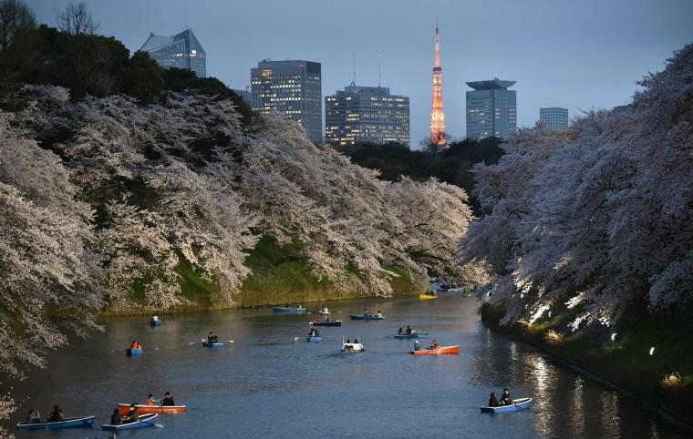 Image: JAPAN-CHERRY-BLOSSOM