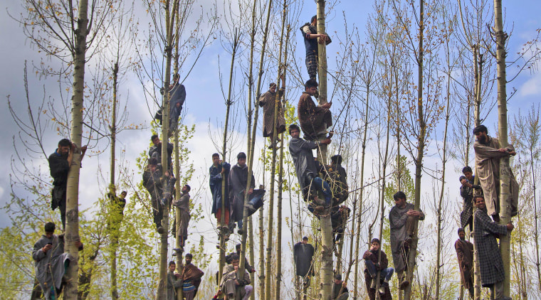 Image: Kashmiri Muslims climb trees to watch the funeral procession of Waseem Malla
