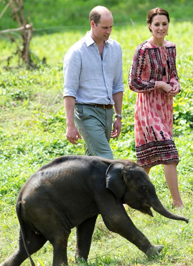 Duke and Duchess of Cambridge visiting animals.