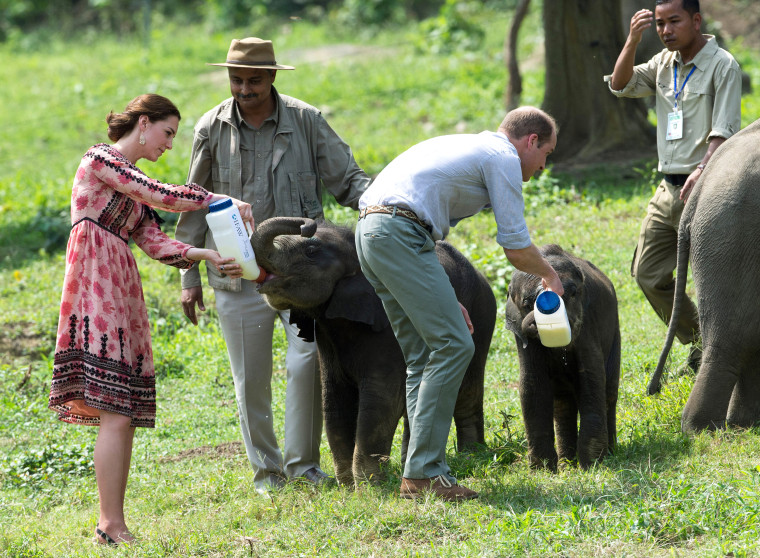 Image: Duchess Kate and Prince William feed baby elephants