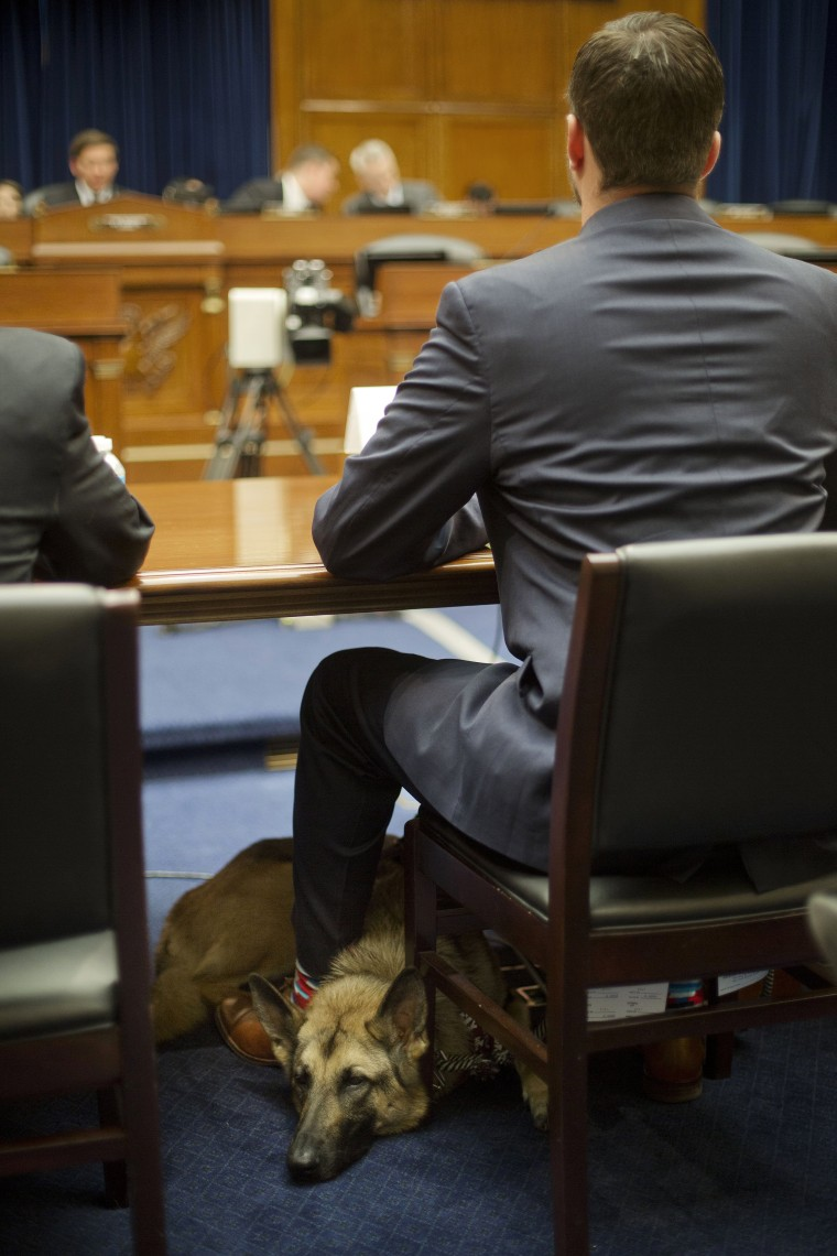 Image: Military veteran Cole Lyle, who suffers with PTSD, with his dog Kaya, testifies on Capitol Hill