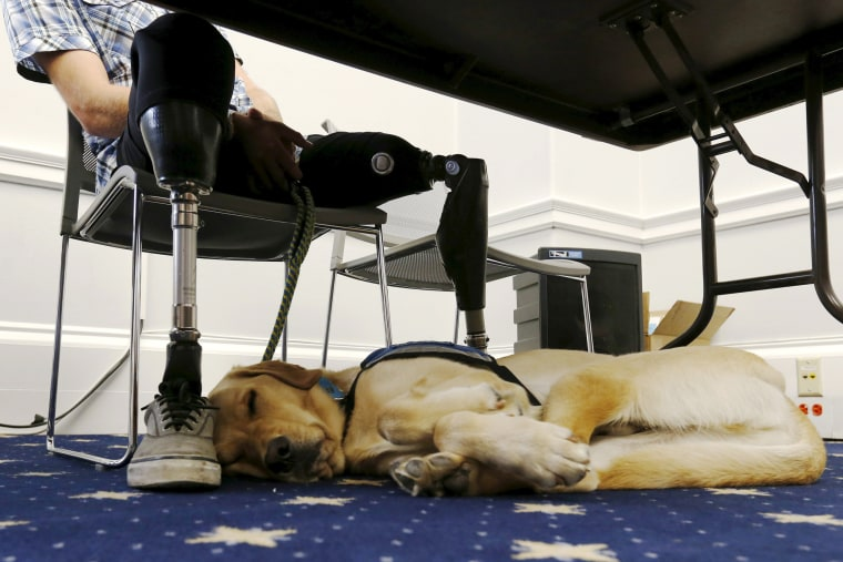 Image: Knoxville, a trained service dog, sleeps at the feet of LeRoy during a U.S. House Military Veterans Caucus briefing on legislation promoting service dogs for military veterans on Capitol Hill in Washington