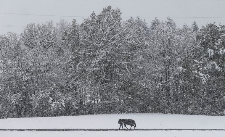 Image: A man walks his horse on a partially snow covered path in Gnadenwald