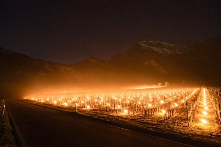 Image: Anti-frost candles burn in a vineyard in Flaesch