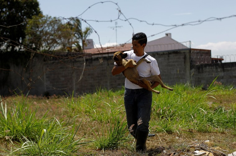 Image: The Wider Image: Land of the Strays