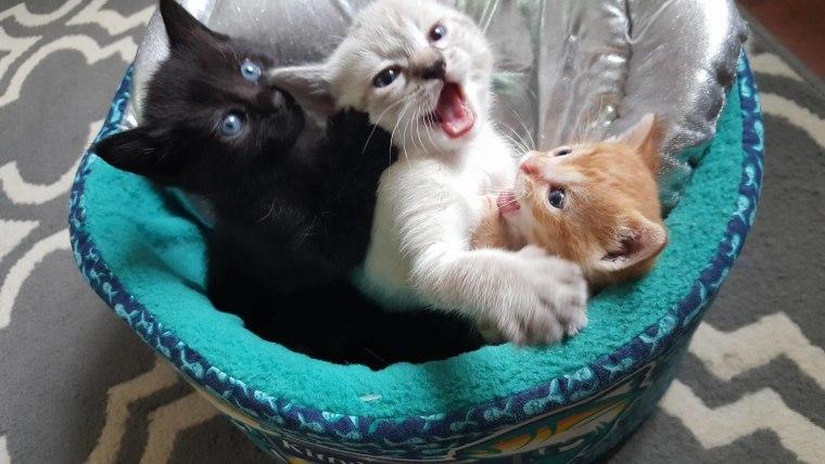 Cody Garrett's rescue kitten, Squirt
