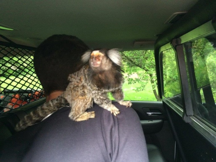IMAGE: Monkey business in Burien, Washington