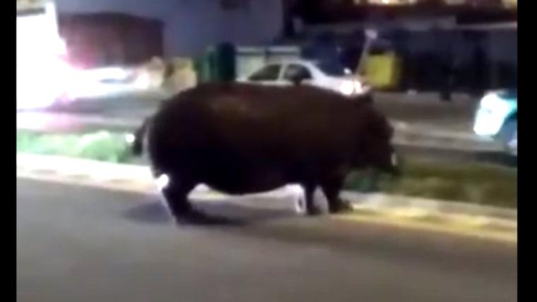 Image: Hippo in Palos de la Frontera