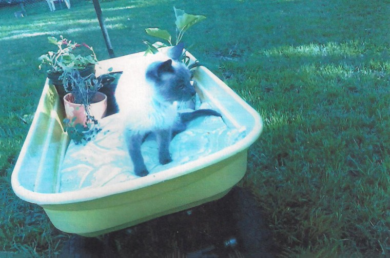 World's Oldest cat relaxing in summer