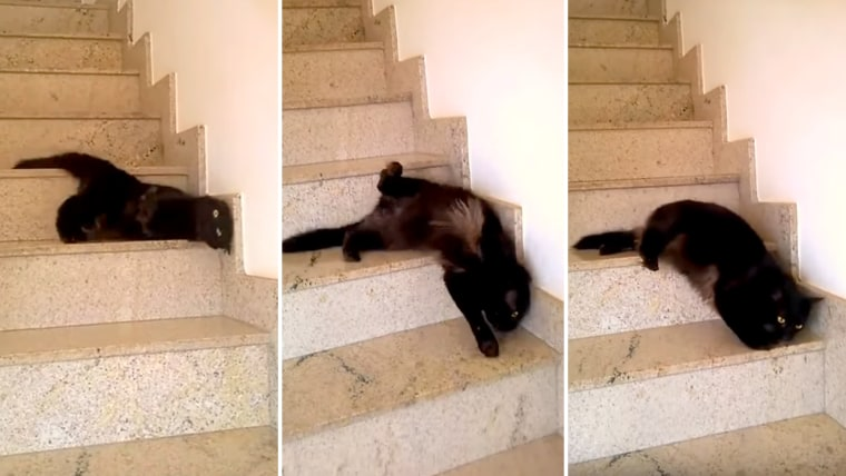 Cat walking down the steps
