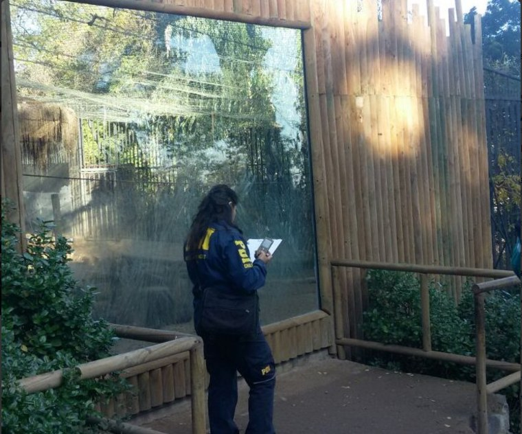 Chilean police investigating the attempted suicide at Santiago Metropolitan Zoo.