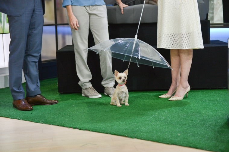 Summer gadgets for dogs and pets