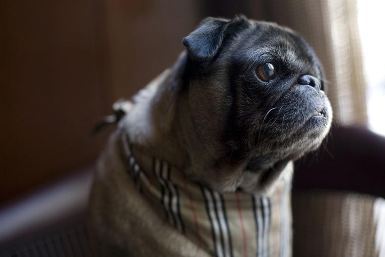 Park Hyatt Chicago hotel adopts rescue dog