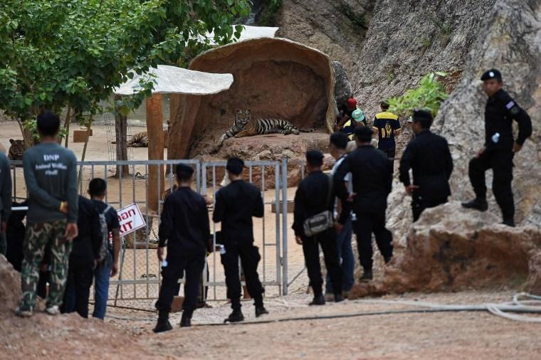 Image: THAILAND-ANIMAL-RELIGION-TIGERS