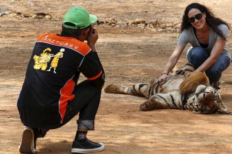 Image: Spotlight: Thailand's Tiger Temple