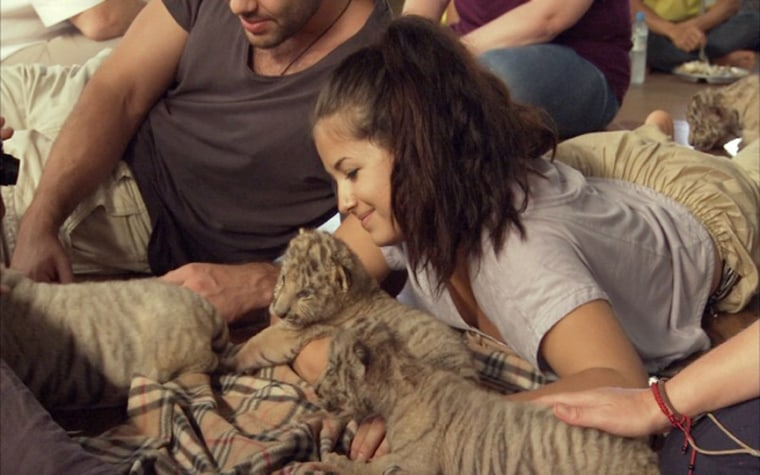 """Visitors relax with tiger cubs at Thailand's """"Tiger Temple"""" in 2012."""