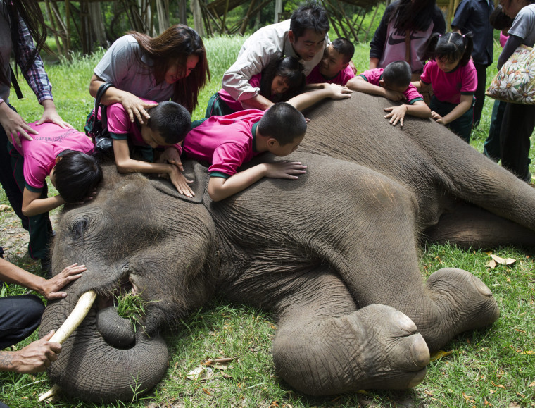 Image: Thai elephant education program for disabled children