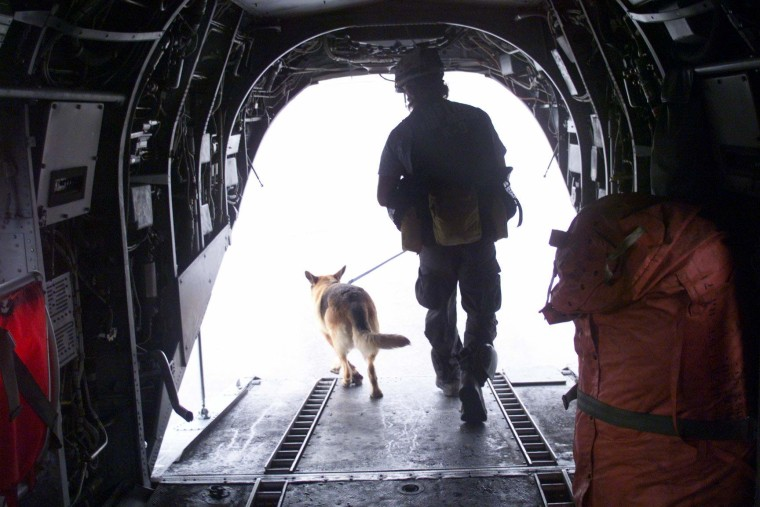 Mizu the search dog with handler Billy Kidd