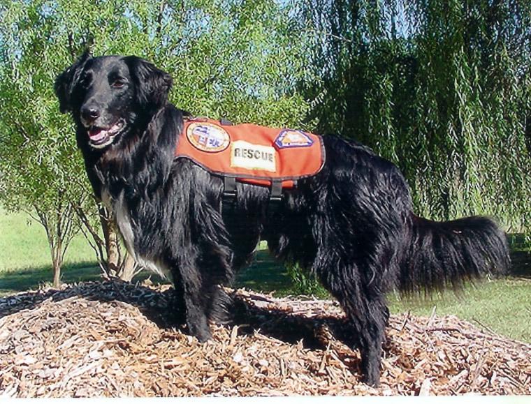 Ground Zero search dog Polly