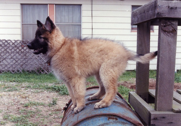 Ground Zero search dog Topper