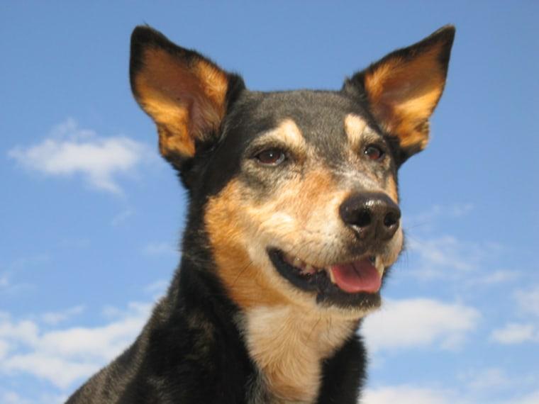 Ground Zero search dog Ditto