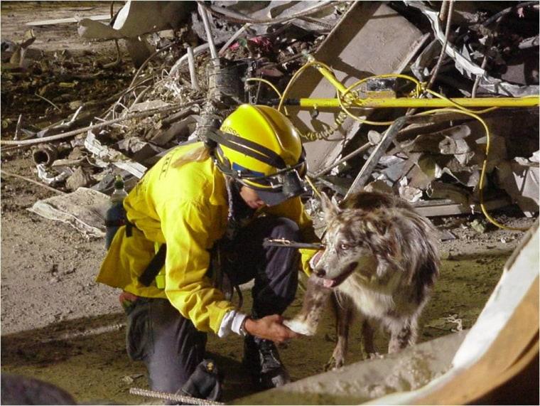 Ground Zero search dog Hawk with handler Cathy Schiltz.