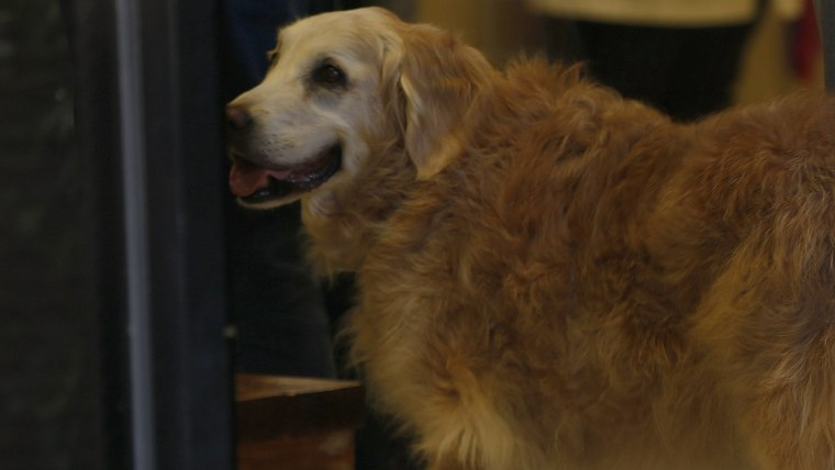 Bretagne the last known living 9/11 search dog has died in a Houston suburb at age 16