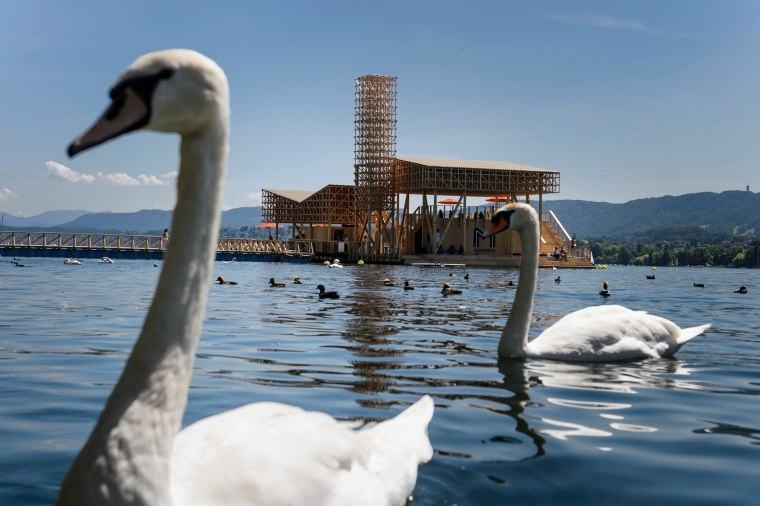 Swans swim in the lake near the 'Pavillon of Reflections' during the preview of Manifesta 11, the roving European Biennial of contemporary art, on June 10th in Zurich.