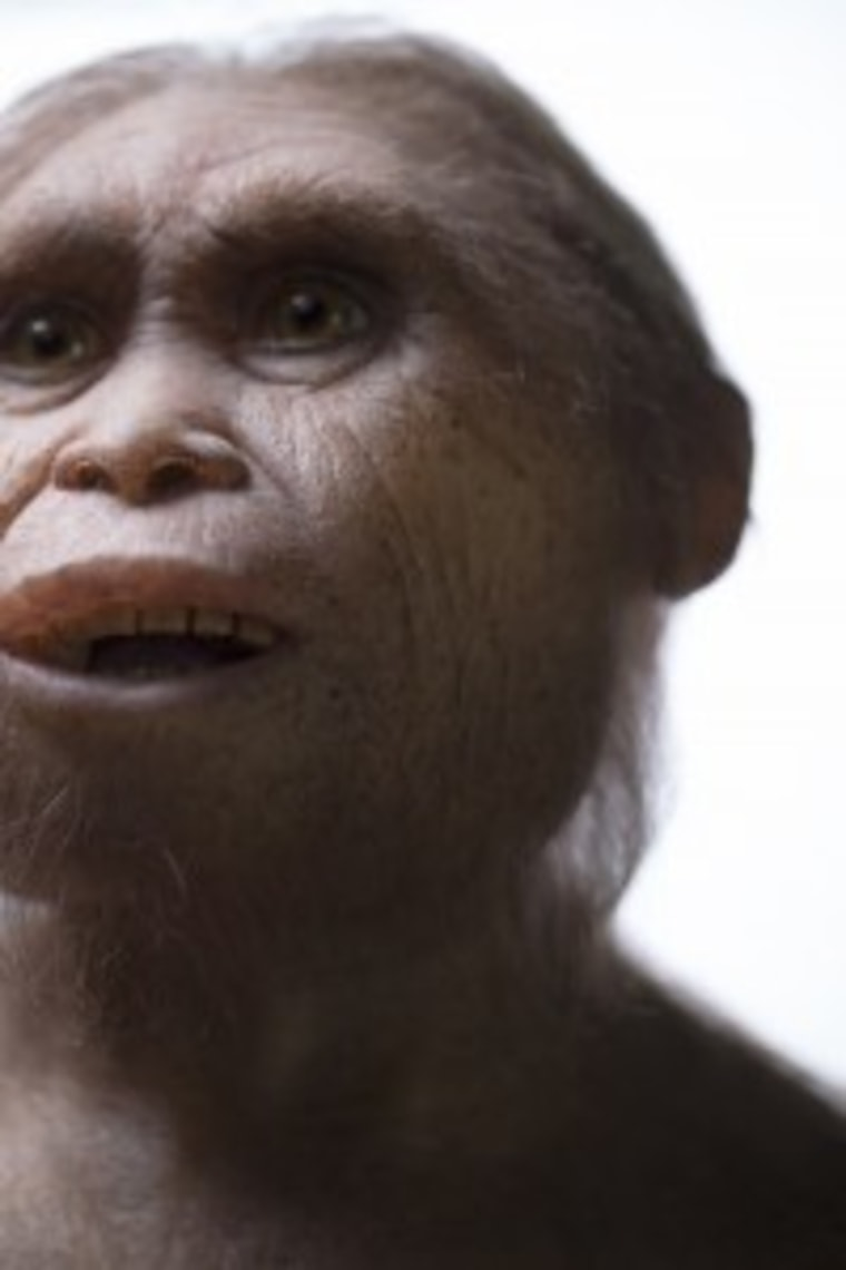Reconstruction of Homo floresiensis by Atelier Elisabeth Daynes