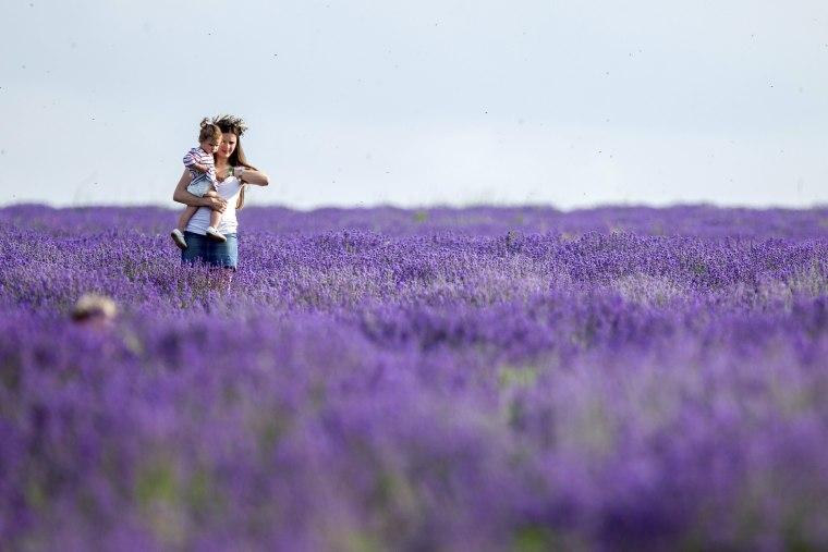 Image: Lavender festival in Cobusca Noua