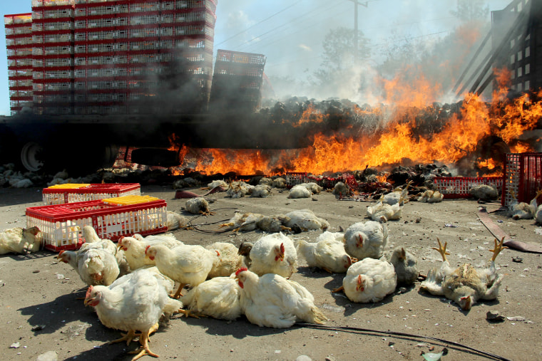 Image: A burned truck carrying chickens is seen after clashes between riot police officers and  protesters from the National Coordination of Education Workers (CNTE) teachers???????? union, in Nochixtlan