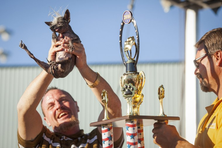 Image: 2016 World's Ugliest Dog Contest in California