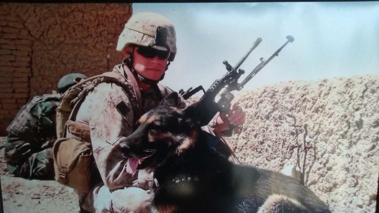 Rico military hero dog